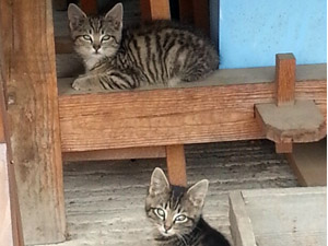 2 Wood Barn Kittens